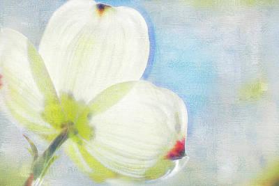 Dogwood Petals Poster by Andrea Kappler
