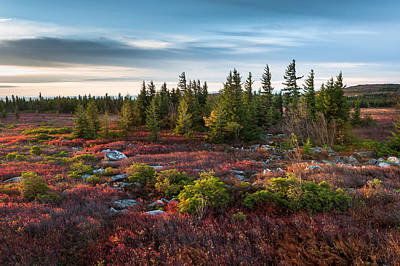 Dolly Sods Wilderness Area West Virginia Poster by Mark VanDyke