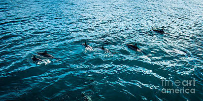 Dolphins Off Of The Na Pali Coast Poster