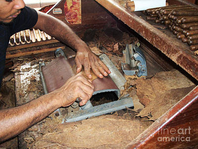 Dominican Cigars Made By Hand Poster