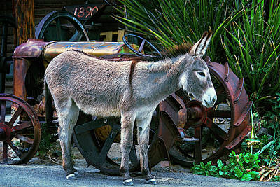Donkey And Old Tractor Poster