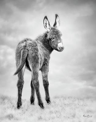 Donkey Days Poster