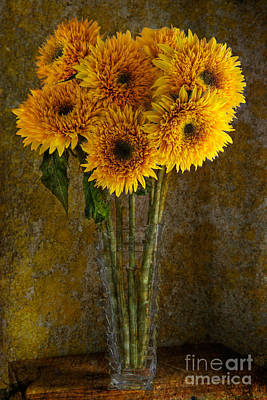 Double Sunflowers In A Glass Vase Poster