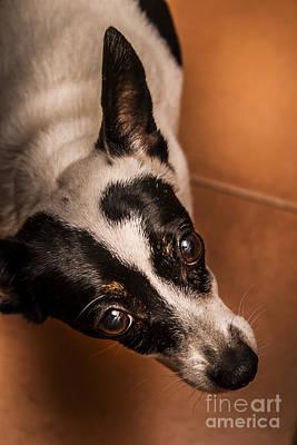 Dough-eyed Dog Poster