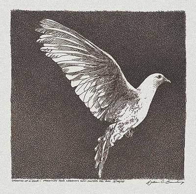 Dove Drawing Poster by William Beauchamp