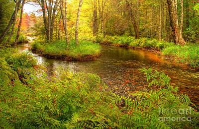 Poster featuring the photograph Downeast Fall Stream by Alana Ranney