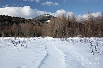 Downes - Oliverian Brook Ski Trail - White Mountains New Hampshire  Poster by Erin Paul Donovan