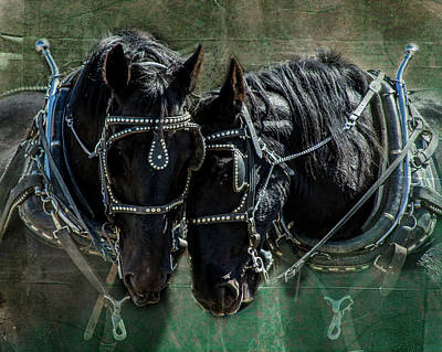 Poster featuring the photograph Draft Horses by Mary Hone