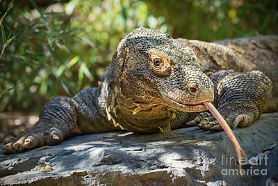 Dragon Tongue Poster by Jamie Pham