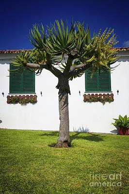 Dragon Tree Garden House Poster