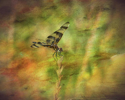 Dragonfly Art Poster