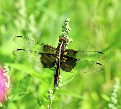 Dragonfly Beauty Poster