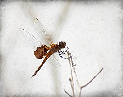 Dragonfly Poster by Carolyn Marshall