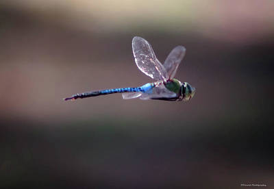 Dragonfly Poster by Debra Forand