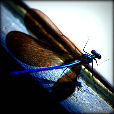 Dragonfly II Poster by Susie Weaver