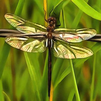Dragonfly In Brown And Yellow Poster by Tracey Harrington-Simpson