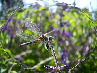 Dragonfly In Bubble Poster