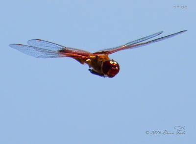Dragonfly In Flight Close Up Poster by Brian Tada