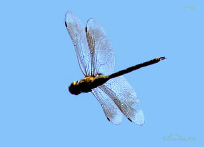 Dragonfly In Flight, Front Yard Poster by Brian Tada
