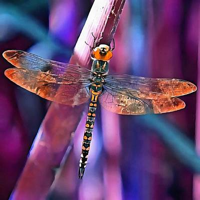 Dragonfly In Orange And Blue Poster by Tracey Harrington-Simpson