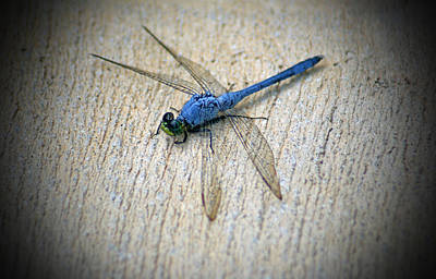Dragonfly Poster by Jean Haynes