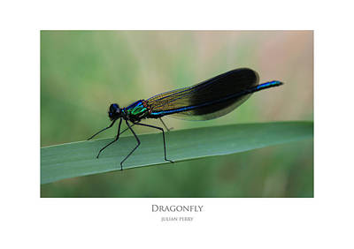Poster featuring the digital art Dragonfly by Julian Perry