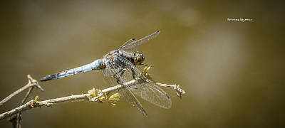 Poster featuring the photograph Dragonfly On The Spot by Stwayne Keubrick