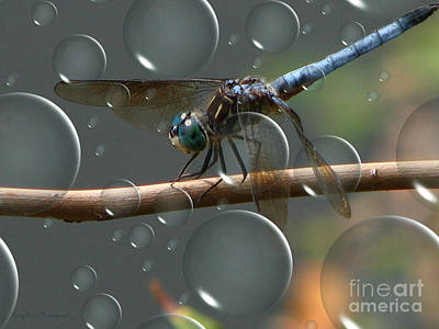 Poster featuring the photograph Dragonfly Opera by Roxy Riou