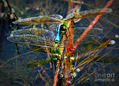 Dragonfly Reflections Planting Young Poster by Reid Callaway