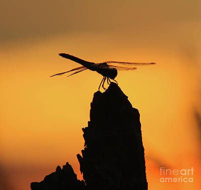 Dragonfly Sunset Poster