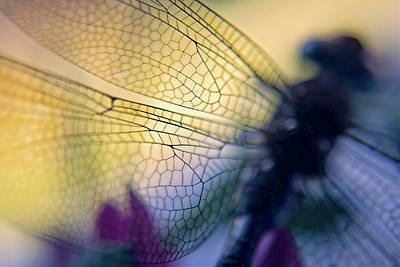 Dragonfly Wings Poster by Susan Leggett