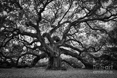 Dramatic Angel Oak In Black And White Poster