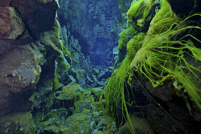 Dramatic Fluorescent Green Algae Poster