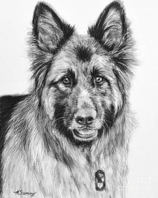 Drawing Of A Long-haired German Shepherd Poster
