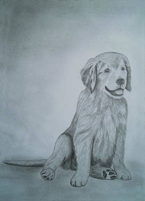 Drawings Portrait Artwork Of A Little Dog   Poster