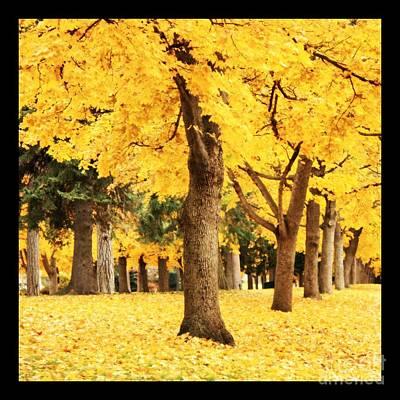 Dreamy Autumn Gold Poster by Carol Groenen