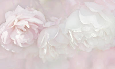 Dreamy Rose Flowers In Pink White Pastels Poster
