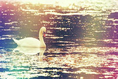 Dreamy Swan Poster by Karol Livote