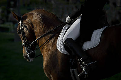 Poster featuring the photograph Dressage D5284 by Wes and Dotty Weber