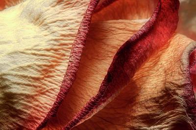 Dried Rose Petals I Poster by Tom Mc Nemar