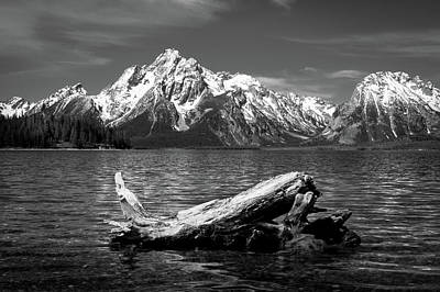 driftwood and Mt. Moran Poster