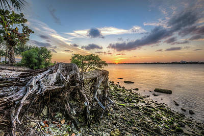 Poster featuring the photograph Driftwood At The Edge by Debra and Dave Vanderlaan