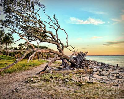 Driftwood Beach Morning 2 Poster