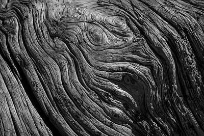 Driftwood Black And White Poster by Garry Gay
