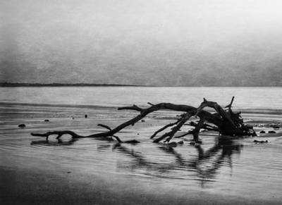 Driftwood Dream In Black And White Poster