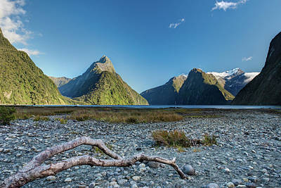 Poster featuring the photograph Driftwood In Milford Sound by Gary Eason
