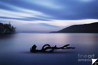 Poster featuring the photograph Driftwood by Jim  Hatch