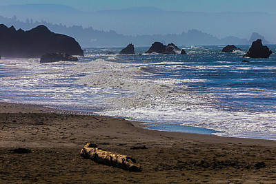 Driftwood Log Poster by Garry Gay
