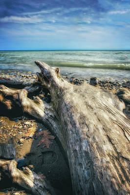 Driftwood On Beach - Grant Park - Lake Michigan Shoreline Poster by Jennifer Rondinelli Reilly - Fine Art Photography