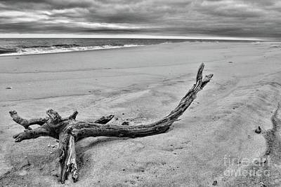 Poster featuring the photograph Driftwood On The Beach In Black And White by Paul Ward